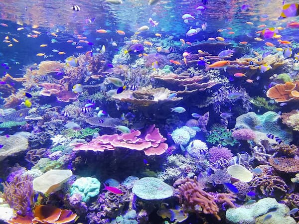 Coral Reef Info