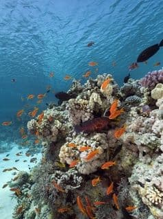 Shallow reefs, clear water, and abundant marine life