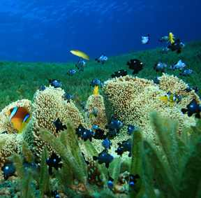 seagrass reef